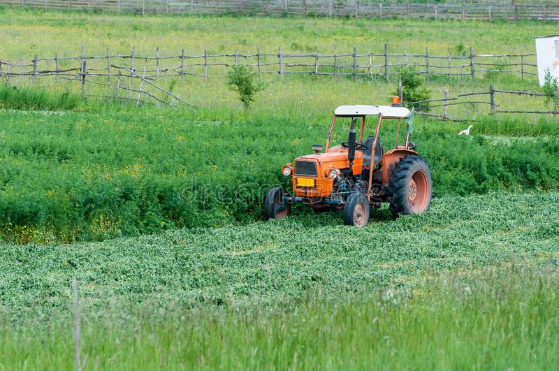 Vecchio trattore arancio su erba di recente cutted fotografie stock