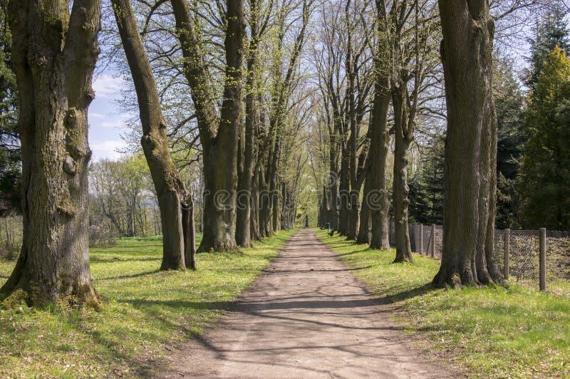 Vecchio vicolo storico della castagna in Chotebor durante la stagione primaverile, alberi in due file, scena romantica immagine stock