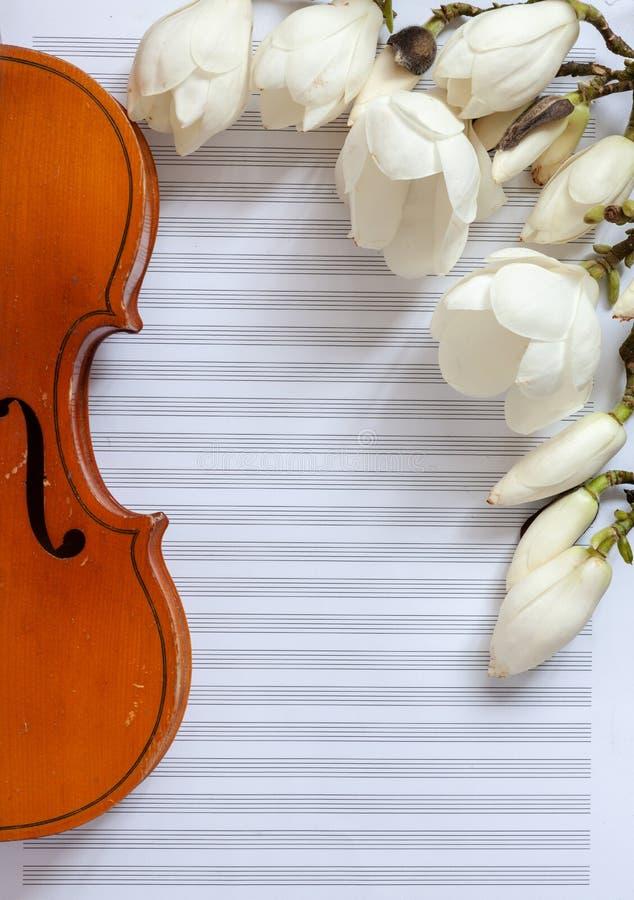 Vecchio violino e brances sboccianti della magnolia sulla carta per appunti bianca Vista superiore, primo piano immagine stock libera da diritti