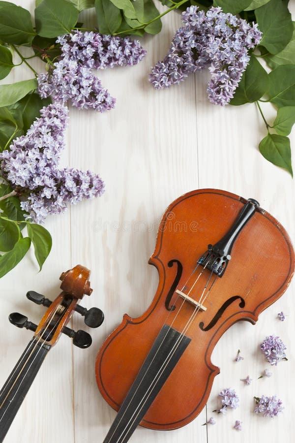 Vecchio violino e fiori lilla su fondo di legno bianco Strumento musicale messo insieme Vicino su, wiev superiore, fondo della mo immagini stock