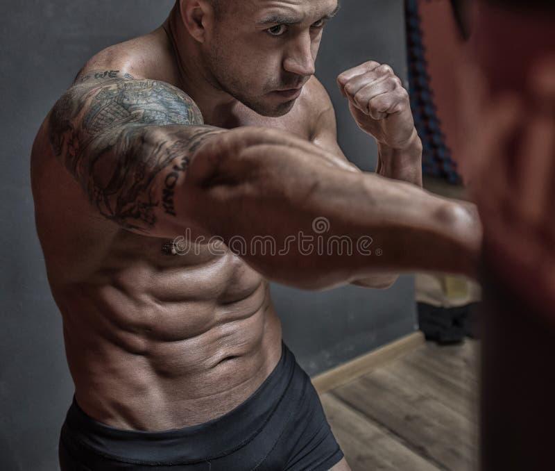 Vechter gemengde vechtsporten die in de gymnastiek opleiden stock afbeeldingen