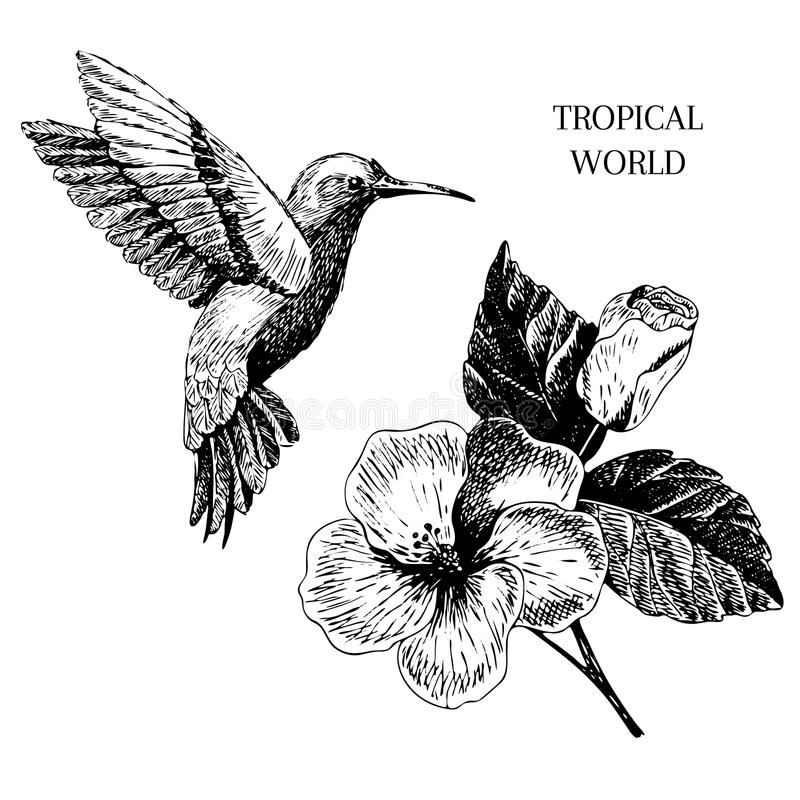 Vecotr手拉的热带植物象 异乎寻常的被刻记的叶子和花 在白色的Isoalated 木槿,蜂鸟 库存例证