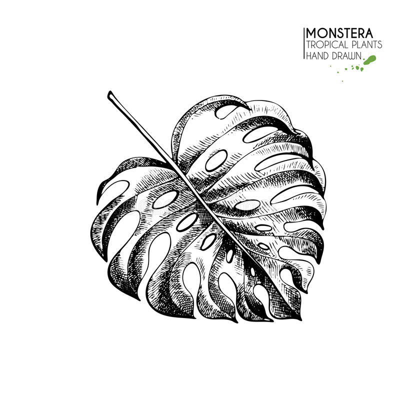 Vecotr hand drawn tropical plant icons. Exotic engraved leaves and flowers. Isoalated on white. Monstera deliciosa palm royalty free illustration