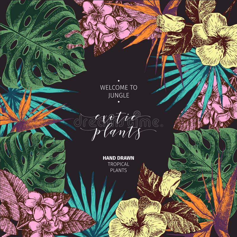 Vecotr ręki rysować tropikalne rośliny plakatowe Egzoty grawerujący kwiaty i liście Monstera, livistona palmowi liście, birdof zdjęcie royalty free