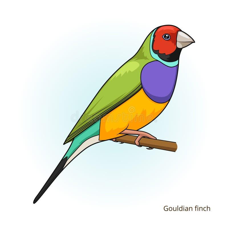 Vecteur éducatif de jeu d'oiseau de pinson de Gouldian illustration stock