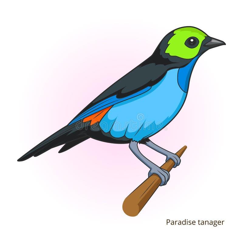 Vecteur éducatif de jeu d'oiseau de tanager de paradis illustration de vecteur