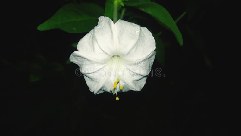 vecteur abstrait d'illustration de ketmie de fleur photo libre de droits