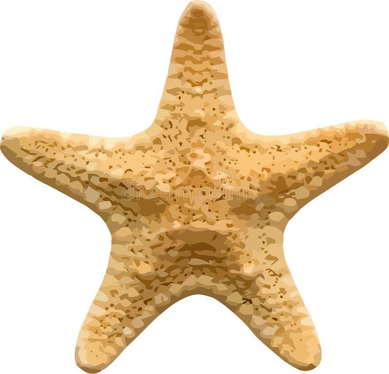 vecteur d'étoiles de mer image libre de droits