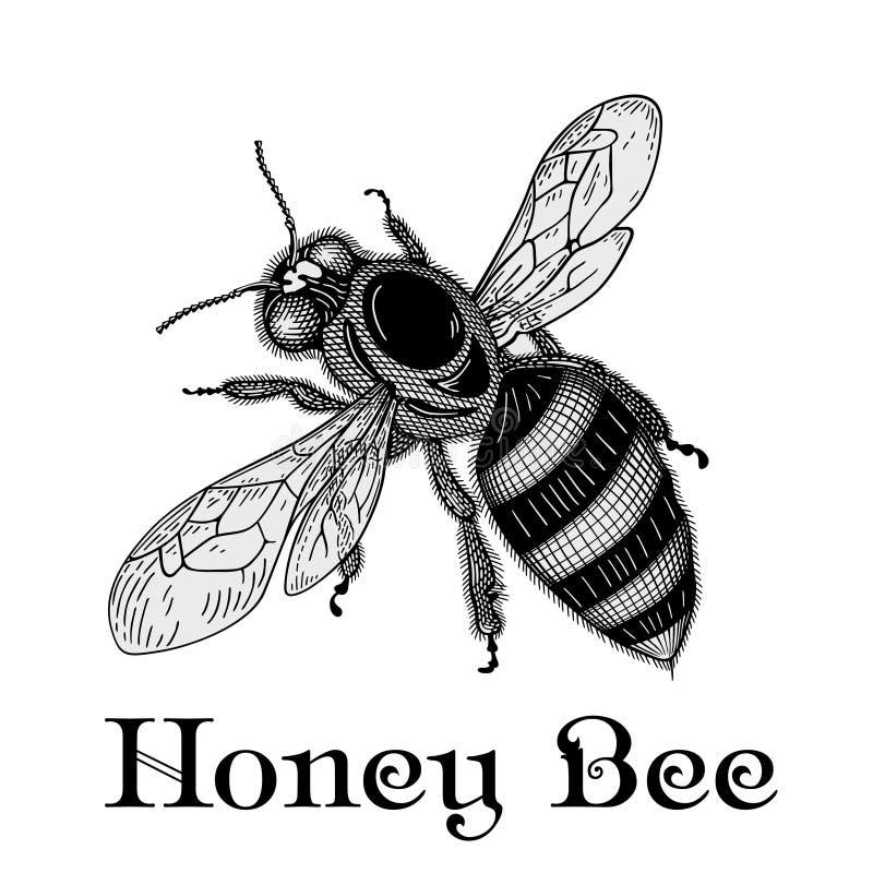 Vecteur d'abeille illustration libre de droits