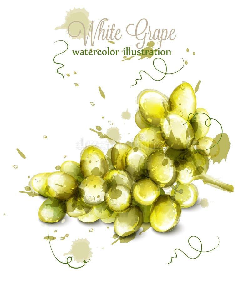 Vecteur d'aquarelle de raisins blancs Illustrations peintes de style d'éclaboussure illustration de vecteur