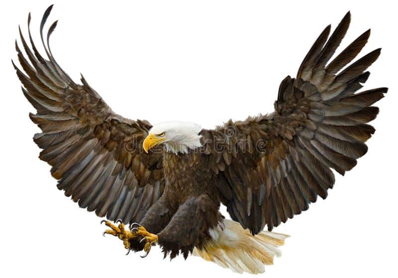 Vecteur d'atterrissage d'attaque surprise d'aigle chauve illustration stock
