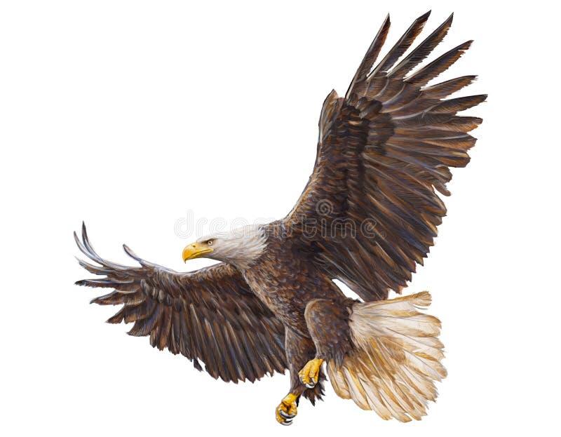 Vecteur d'atterrissage d'Eagle chauve illustration stock