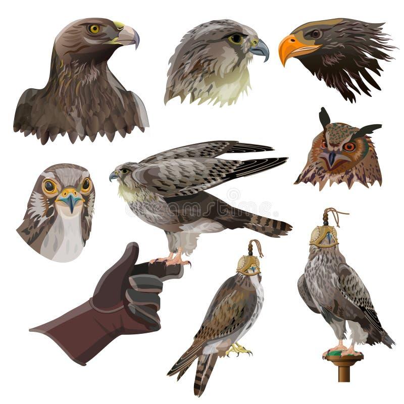 Vecteur d'ensemble de fauconnerie illustration de vecteur