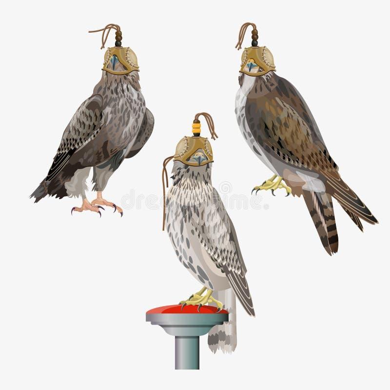 Vecteur d'ensemble de fauconnerie illustration stock