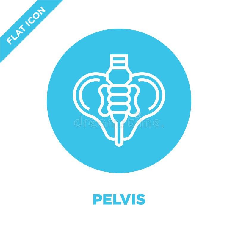vecteur d'icône de bassin de collection d'organes humains Ligne mince illustration de vecteur d'icône d'ensemble de bassin Symbol illustration stock