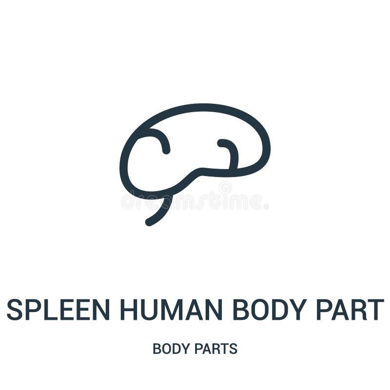 vecteur d'icône de pièce de corps humain de rate de collection de parties du corps Ligne mince illustration de vecteur d'icône d' illustration stock