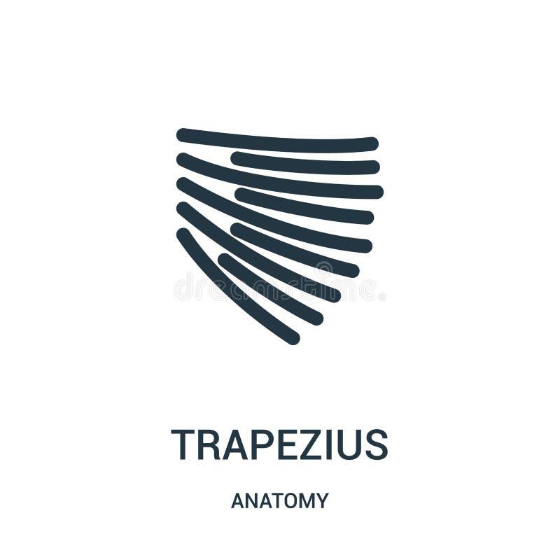 vecteur d'icône de trapezius de collection d'anatomie Ligne mince illustration de vecteur d'icône d'ensemble de trapezius Symbole illustration libre de droits