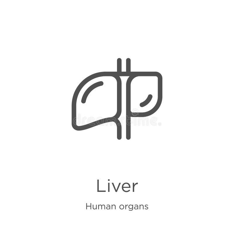 vecteur d'ic?ne de foie de collection d'organes humains Ligne mince illustration de vecteur d'ic?ne d'ensemble de foie Contour, l illustration stock