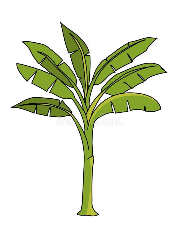 Vecteur d'illustration de bananier illustration de vecteur