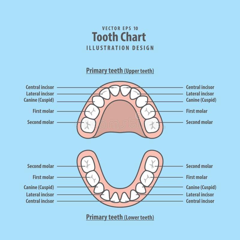 Vecteur d'illustration de dents primaires de diagramme de dent sur le fond bleu illustration stock