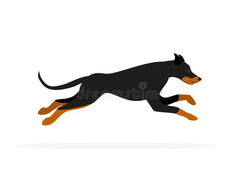 Vecteur d'isolement par fonctionnement de chien de pinscher de dobermann illustration de vecteur