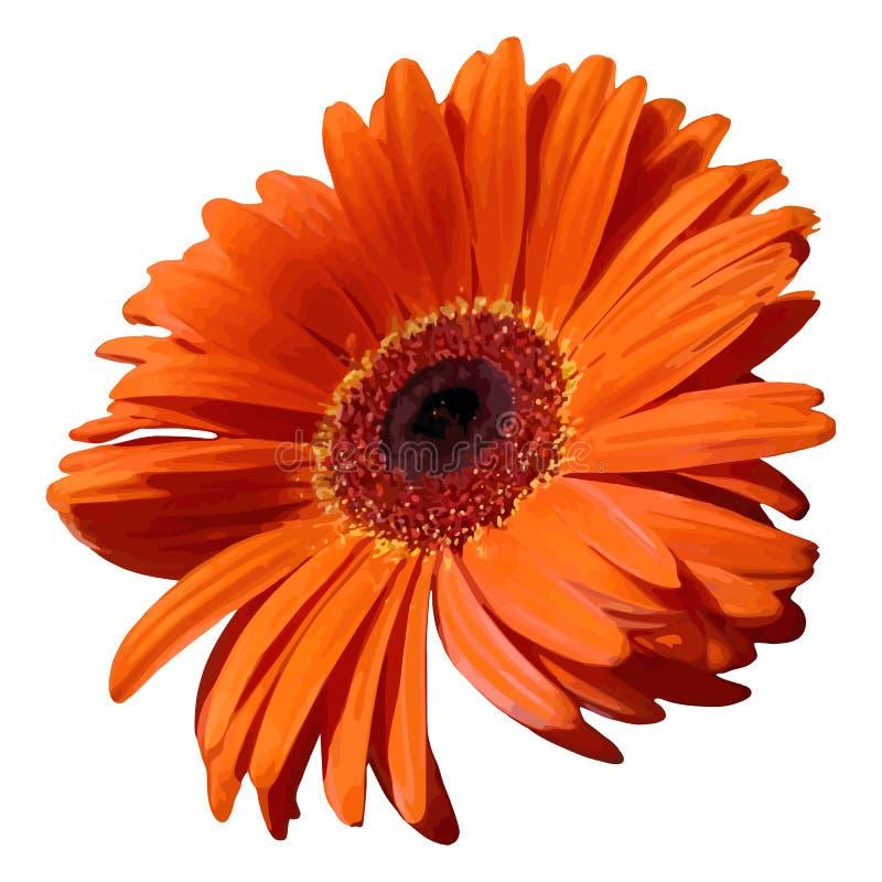 Vecteur d'isolement réaliste de gerbera de fleur d'usine orange de fleur illustration de vecteur