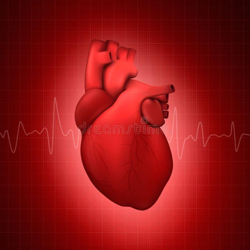 Vecteur 3d Modèle de cardiologie réaliste et brillant avec fermeture de la ligne d'impulsion sur fond médical à fil rouge illustration stock