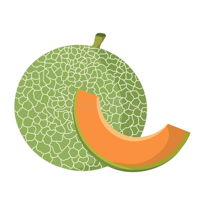 Vecteur de cantaloup Illustration fraîche de cantaloup illustration stock