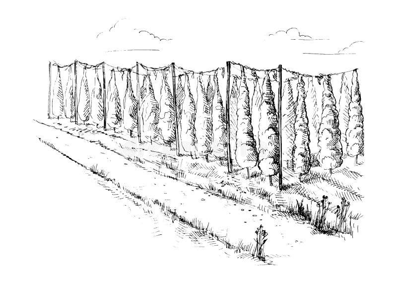 Vecteur de champ d'houblon illustration libre de droits