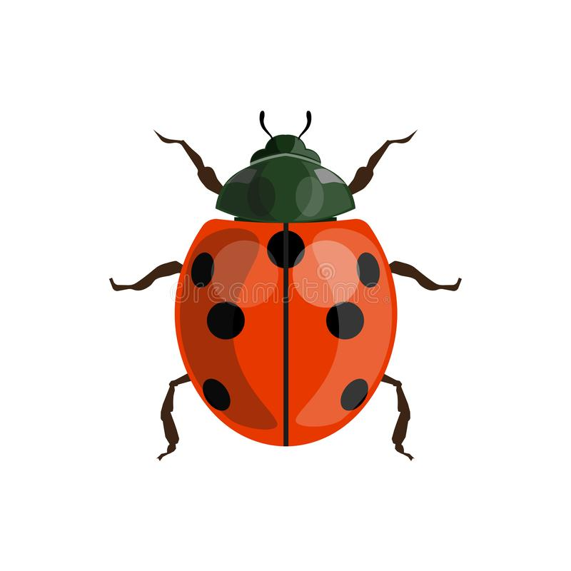 Vecteur de coccinelle de coccinelle illustration stock
