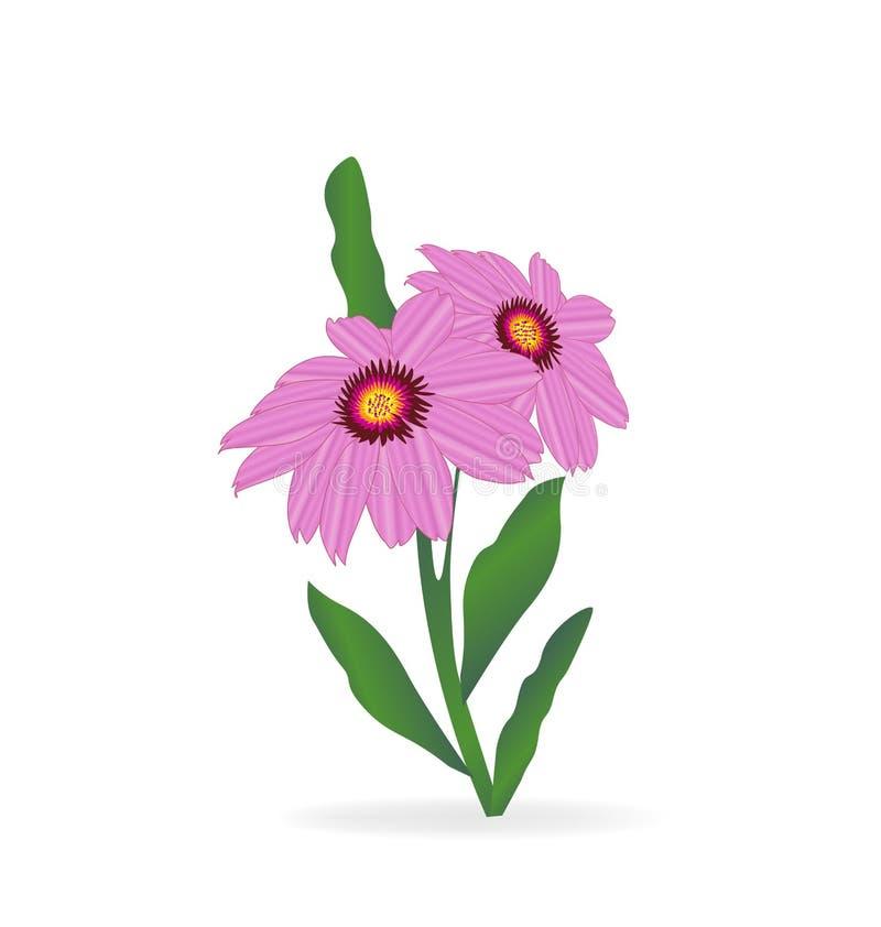 Vecteur de fleur de marguerite de Gerbera illustration de vecteur