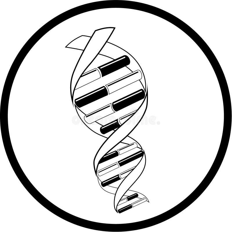vecteur de graphisme d'ADN illustration libre de droits