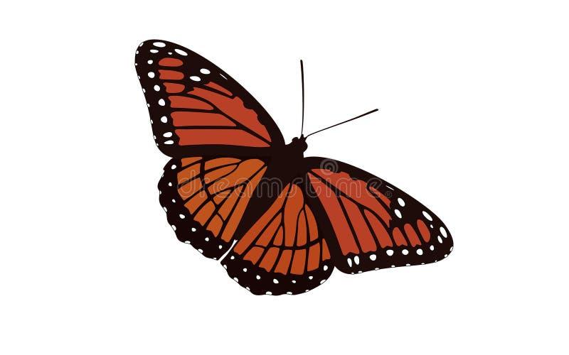 Vecteur de papillon à ailes par orange illustration de vecteur