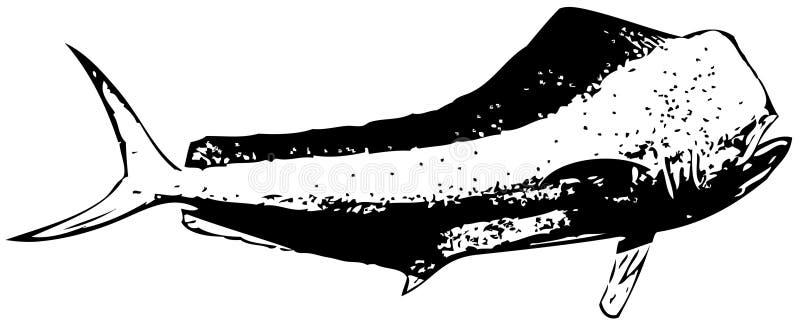 Vecteur de poissons de taureau de Dorado (dauphin) illustration libre de droits
