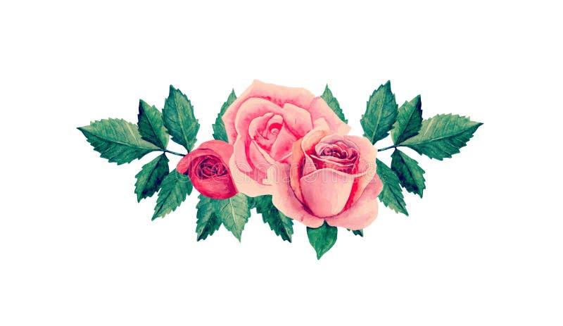 Vecteur de roses d'aquarelle illustration de vecteur