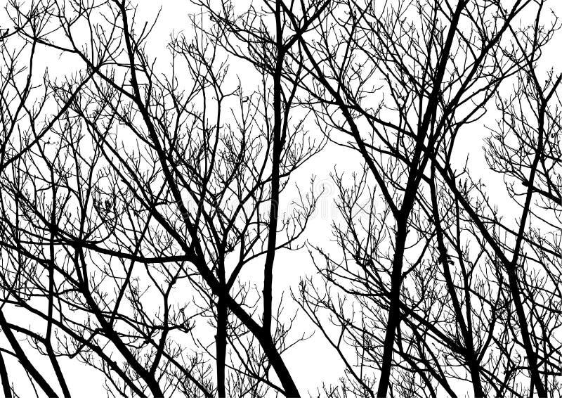 Vecteur de silhouette de brindilles d'arbre illustration libre de droits