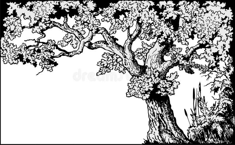 Vecteur de trame de chêne
