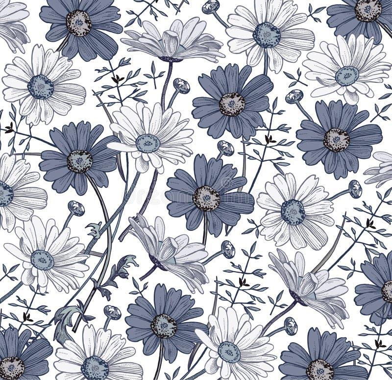Vecteur de Wildflowers d'herbe de camomille Dessin, gravure Fleurs réalistes bleues blanches de floraison de beau fond de vintage image libre de droits