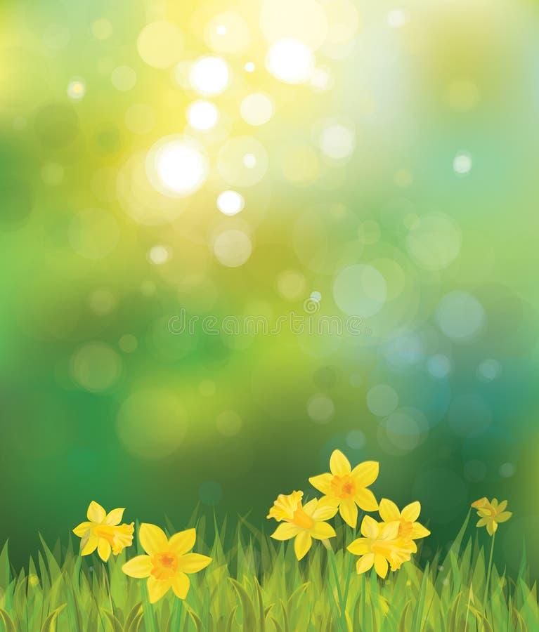 Vecteur des fleurs de jonquille sur le fond de ressort. illustration libre de droits