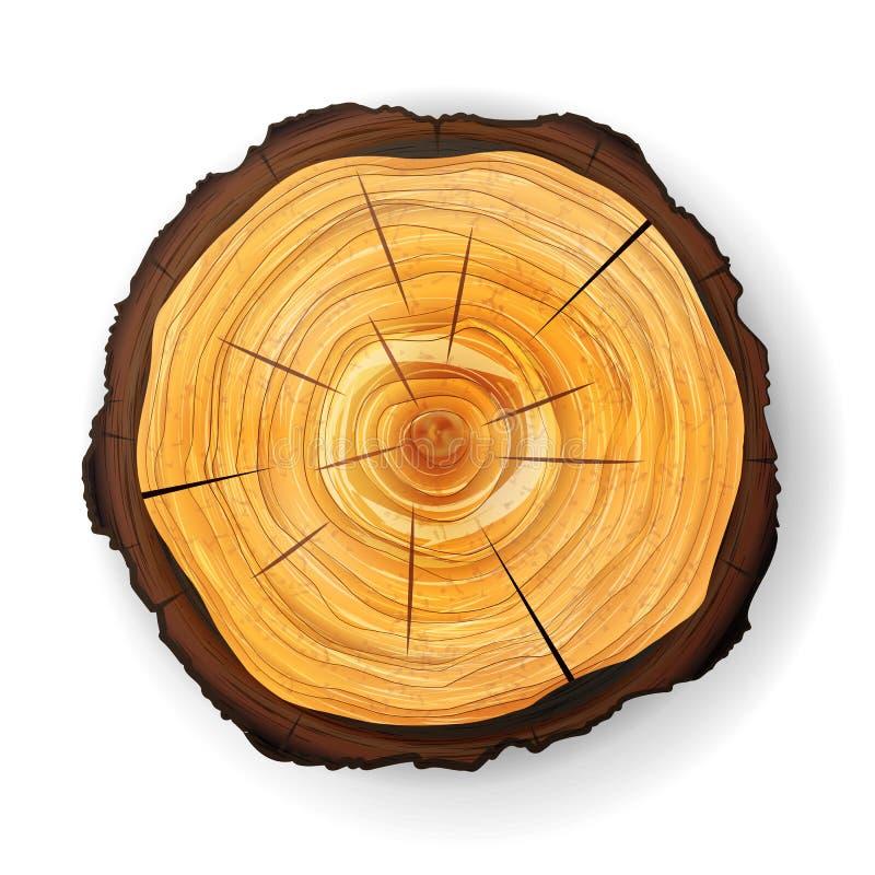 Vecteur en bois de tronçon d'arbre en coupe Coupe ronde avec les anneaux annuels illustration libre de droits