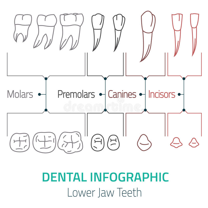 Vecteur infographic dentaire illustration stock
