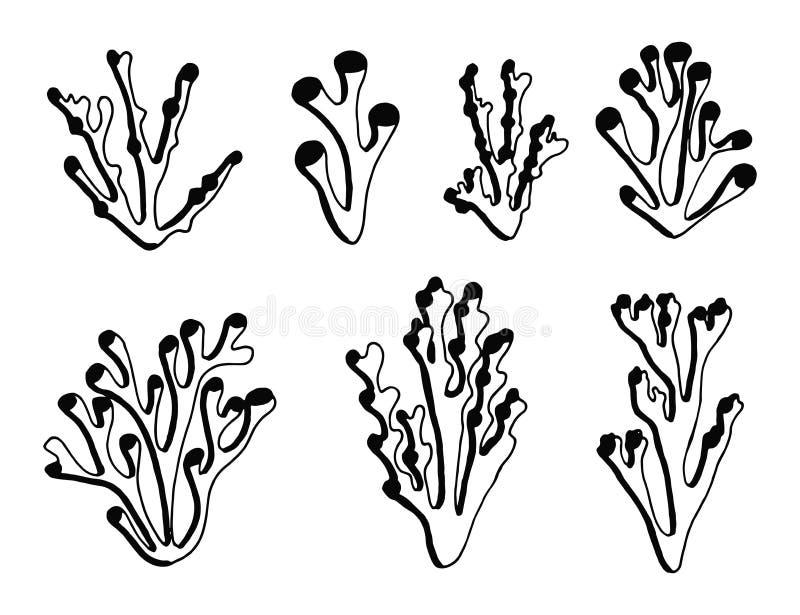 Vecteur marin de noir de silhouette d'algue D'isolement illustration stock