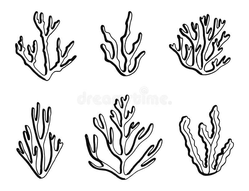Vecteur marin de noir de silhouette d'algue Objets d'isolement illustration stock