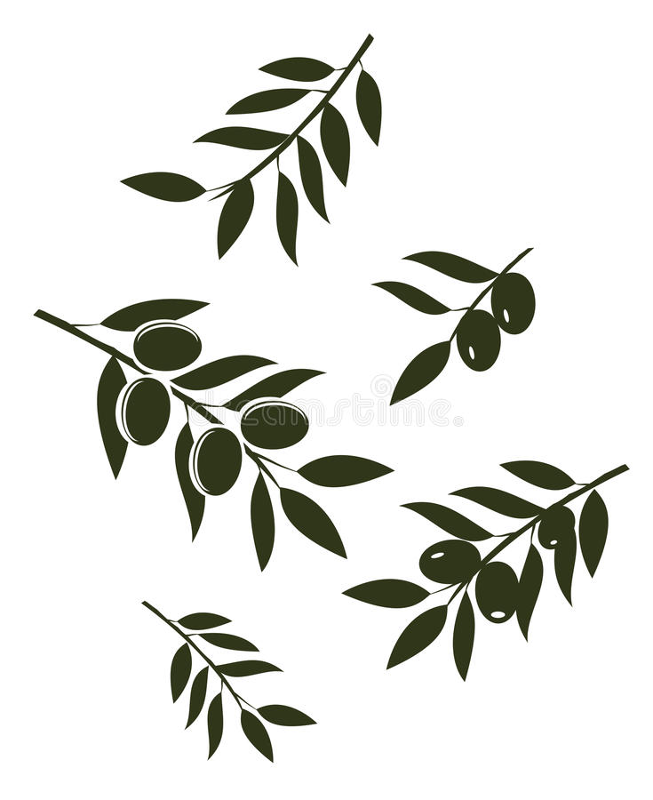 Vecteur Olive Branches illustration stock