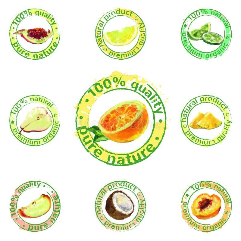Vecteur peint d'icône de fruit illustration libre de droits