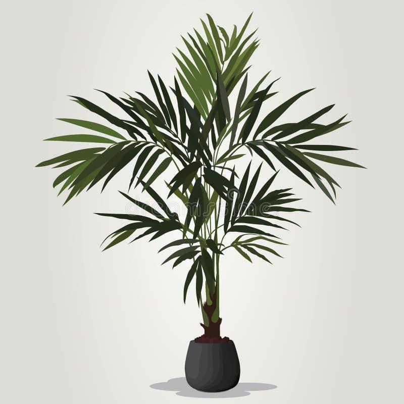 Vecteur réaliste de plante d'intérieur dans la cuvette d'isolement sur le blackground blanc illustration libre de droits