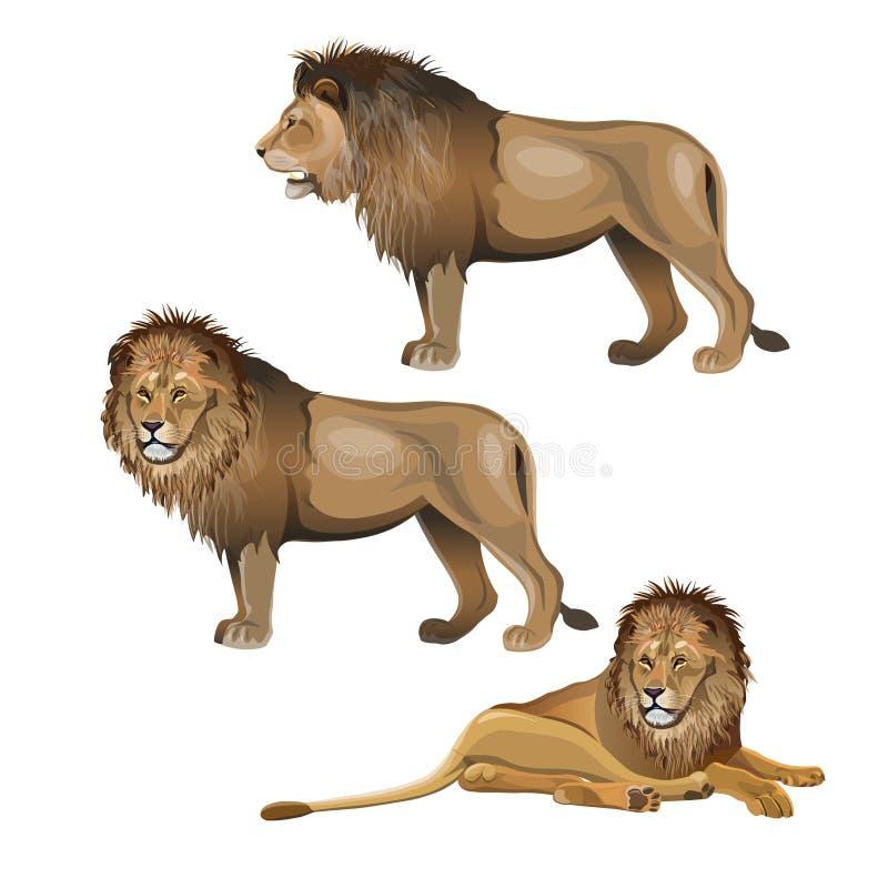 Vecteur réglé de lion illustration stock