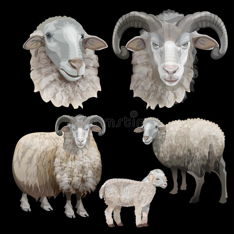 Vecteur réglé de moutons photographie stock libre de droits