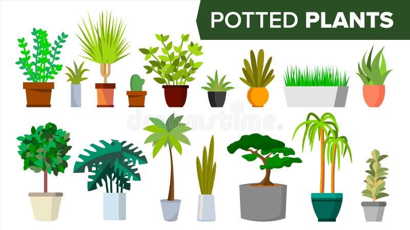 Vecteur réglé par usines mises en pot Maison d'intérieur, plantes d'intérieur modernes de style de bureau Usines de couleur verte illustration de vecteur