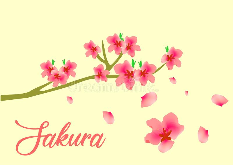 Vecteur Sakura Flower Famous en Asie photos stock